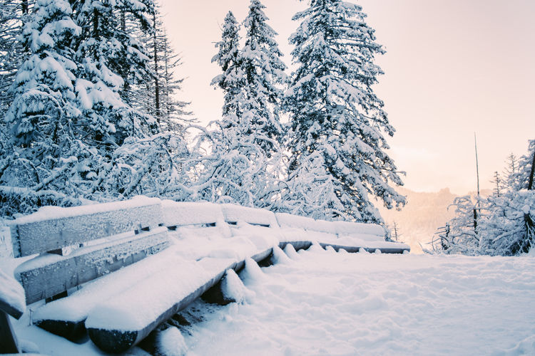 Snow Cold Temperature Winter Tree Nature Frozen Benches Sunset Coniferous Tree Tranquility White Color Scenics - Nature