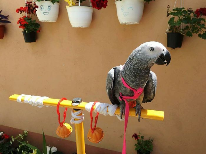 One Animal No People Animal Animal Themes Bird Pets Indoors  Flowers Parrot Bird Parrot Lover Parrot❤ Jako Parrot Parrot Flower Head