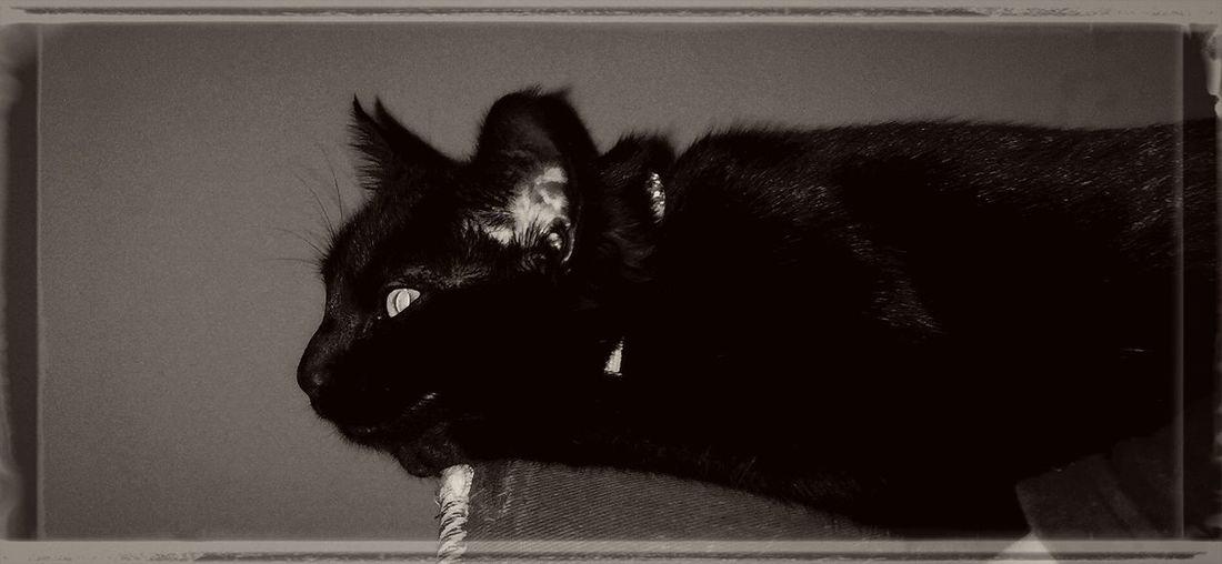Pano Cat. NEM BadKarma NEM Mood NEM Black&white NEM Still Life MobileMart Shootermag EE_Daily: Black And White Dont Be Square EyeEm Best Edits