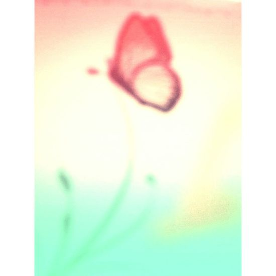 Have A Nice Day♥ Taking Photos Relaxing Eyemcreation Eyeemcolours Butterflies Papillon Art, Drawing, Creativity Artdigital
