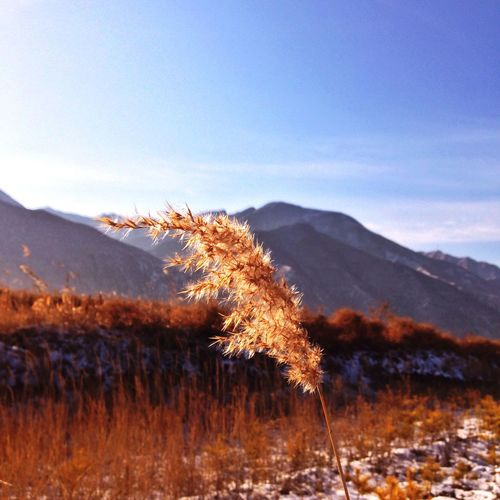 Crisp air, clear sky and a spirited mind. (东安峪口) 2. Ying County Shanxi Province Weed Snow Mountains Sky Field