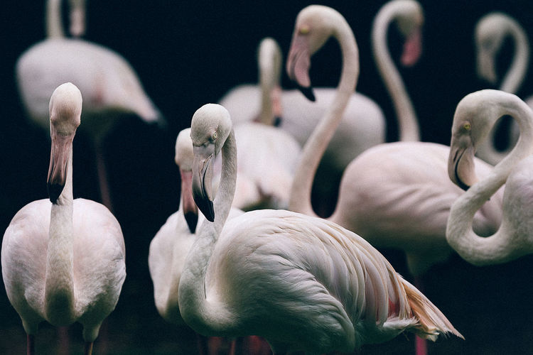 Birds are creepy AF...🐓=🐲 Adventure Animal Animal Themes ASIA Bird Close-up Creepy Day Dinosaur Flamingo Getaway  Kuala Lumpur Malaysia Nature No People Outdoors Tourism Travel Vacation Wanderlust Wildlife Zoo First Eyeem Photo