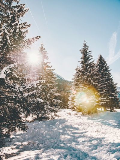 Nieve y luz Lumix GH5 Switzerland Swiss Alps Swiss Snow Winter Sunlight Cold Temperature Sky Plant Nature Beauty In Nature Tree Day Lens Flare Sunbeam Tranquility No People Sunny Frozen Bright Outdoors Covering Sun