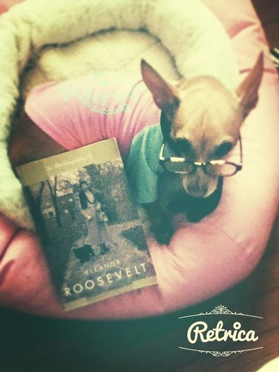 My puppy+glasses+book......= Sophisticatedophisticated Sophistication my dog