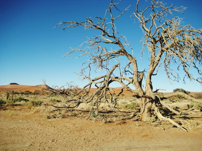 Sossuvlei, Namibia Outdoors Sand Dune Sky Nature Tree Landscape Namibia Africa