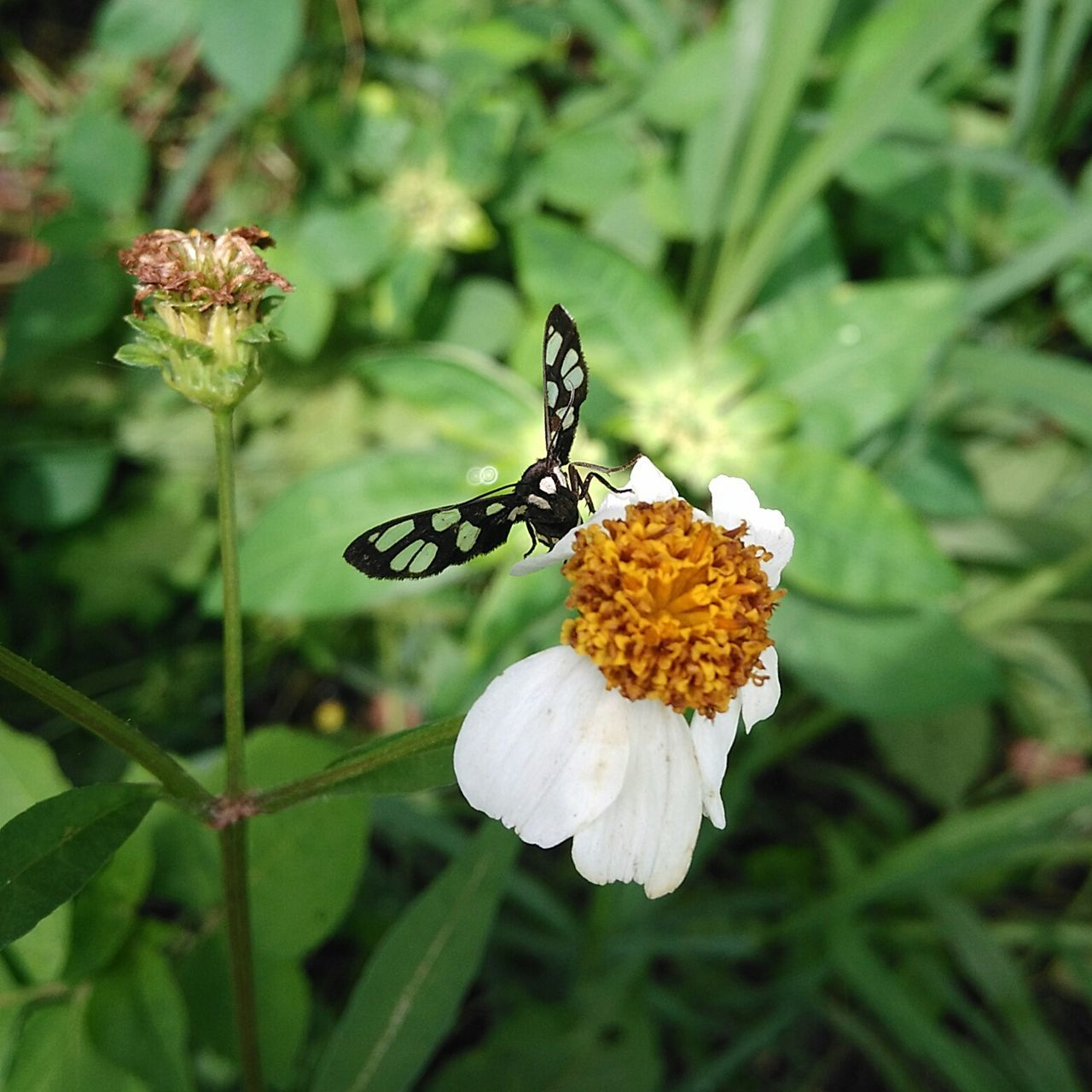 flower, fragility, insect, nature, butterfly - insect, growth, no people, day, focus on foreground, animals in the wild, outdoors, beauty in nature, plant, freshness, animal themes, flower head, close-up