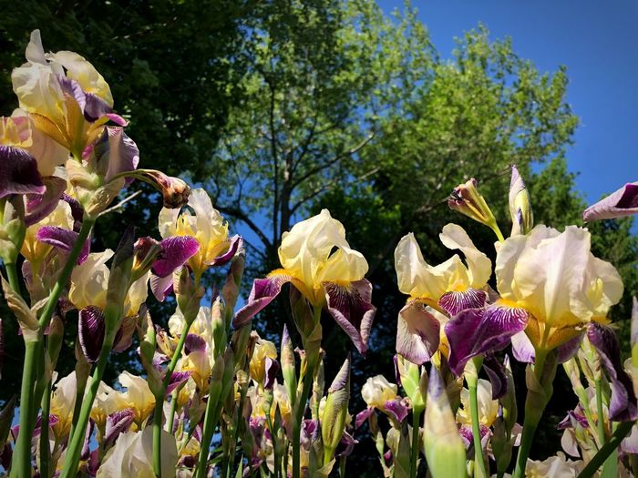 The Week on EyeEm Summertime Iris - Plant Plant Growth Flower Flowering Plant Nature Beauty In Nature No People Freshness Low Angle View Flower Head Sunlight Outdoors Day