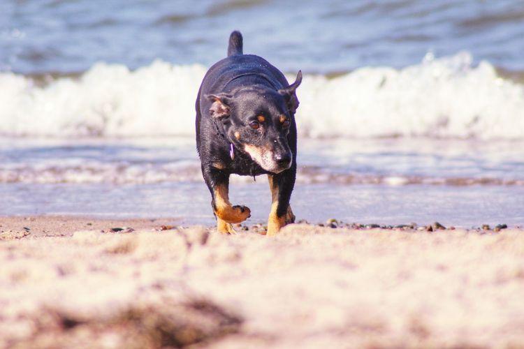 Dog lying on beach