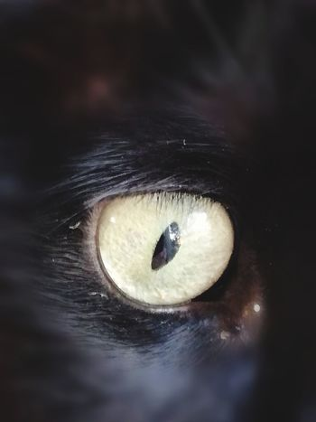 Human Eye One Animal Close-up Pets Human Body Part Eyesight Eye Eyelash People Domestic Animals Eyeball Dog One Person Adult Mammal Adults Only Day