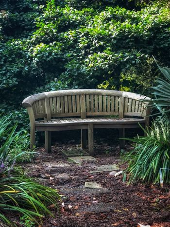 Park bench in such a remote peaceful spot Plant Tree Growth Day Nature No People Plant Part Leaf Wood - Material Seat Forest Park - Man Made Space Outdoors Empty Green Color Beauty In Nature Park Absence Land Sunlight