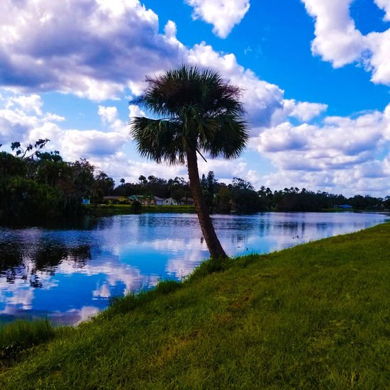 Edgewater Florida Palm Tree Green Color Bkue Sky Blue Cloud - Sky Travel Destinations Travel Photography Sky No People Landscape Outdoors Day Beauty In Nature Scenics Tranquil Scene