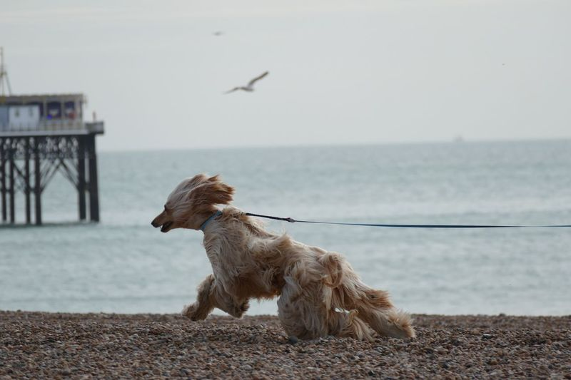 Dog by sea against clear sky