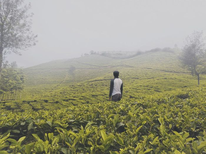 Rear view of man standing at tea plantation during foggy weather