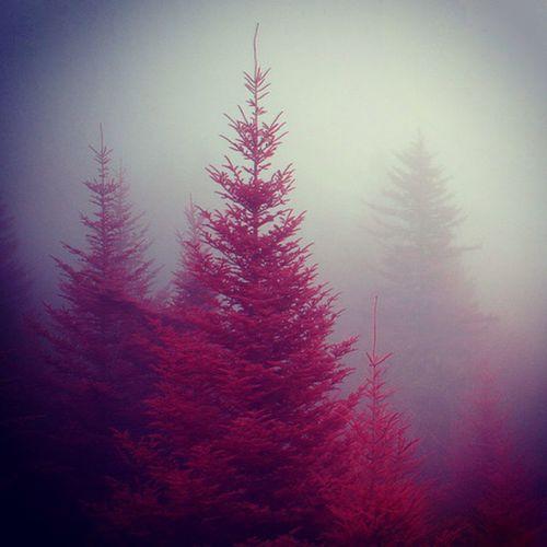 Beautiful <3 Tree