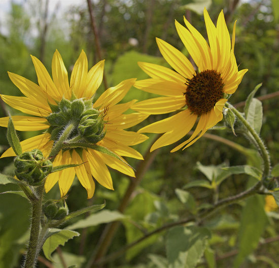 Beauty In Nature Blooming Flower Gentle In Bloom No People Yellow Yellow Petals