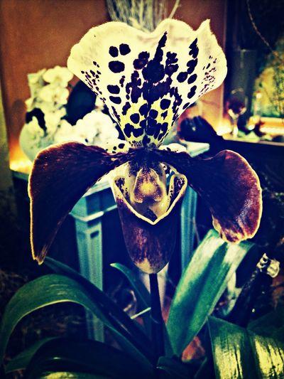 Drôle de fleur