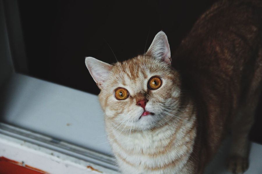 Crazy eyes😼 Cats And Dogs Cats Cats Of EyeEm