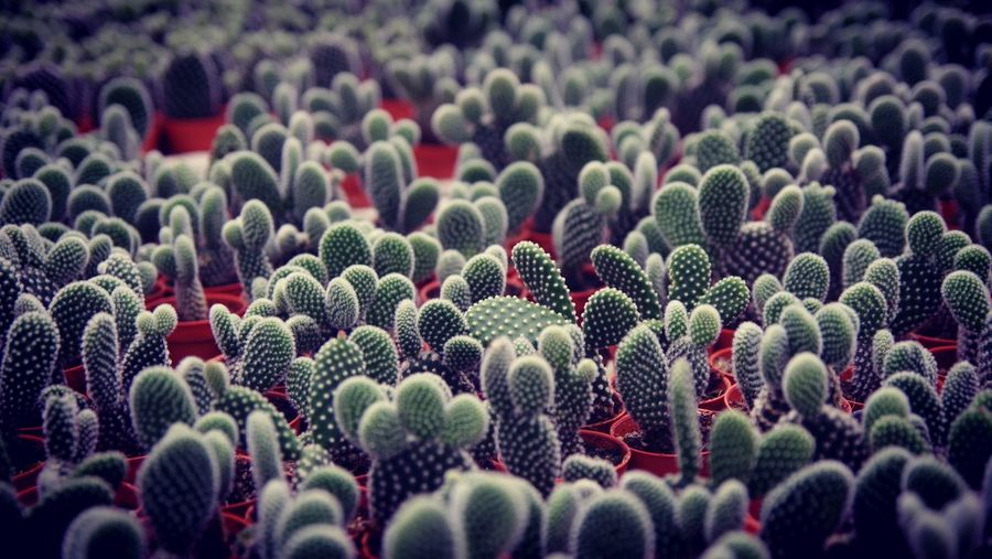 Full Frame Shot Of Cactus In Pots
