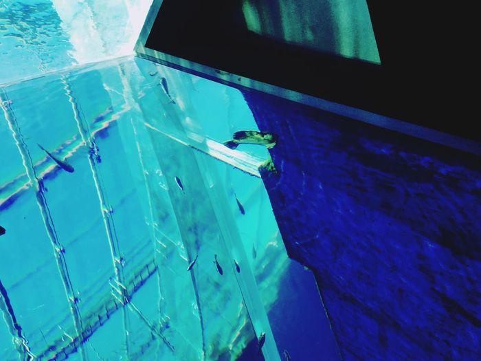 Blue Animal Themes Aquarium Japan Nature Water Indoors  No People UnderSea Fish Aqua Reflection Light Point Of View Nature Summer Memory Minimalist Architecture EyeEm The Architect - 2017 EyeEm Awards