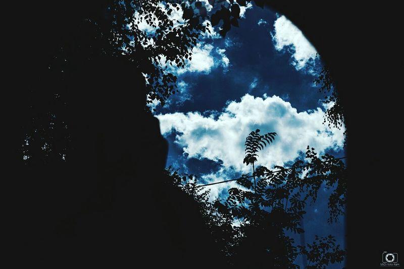 Sky Outdoors Day Nature Tree небо небо облака арка Midifoto Photographer Fujifilm Fuji Teamfuji Russia Россия альметьевск фотограф First Eyeem Photo