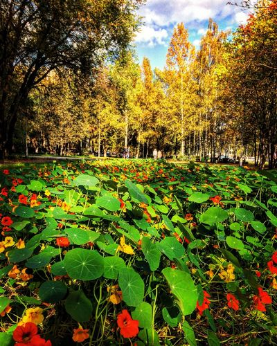 Beauty In Nature Branch Day Field Footpath Fragility Freshness Green Color Growing Growth Leaf Nature No People Non-urban Scene Outdoors Park Park - Man Made Space Plant Scenics Sky Surface Level Tranquil Scene Tranquility Tree WoodLand