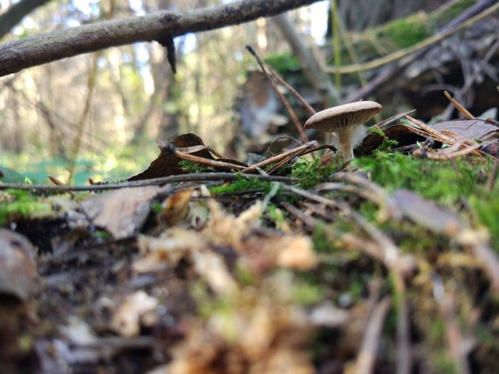 Selective Focus Tree Land Animal Plant Nature Day No People Vertebrate Forest Field Branch Outdoors Growth One Animal Close-up Bird Surface Level Toadstool Leaves Mushroom