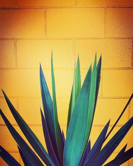 Yellow Yukka Brick Wall Contrasts Minimal_int Rainbow Wall Rw_happycolors Ptk_minimal Pocket_colors Filltheframe_nio 9Vaga_ColorYellow9 Ig_4every1_yellow