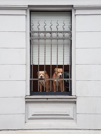 Window Domestic Animals Animal Themes Dog Trapped Dogs Dog Life Dog Window Animals Animal Photography Animal_collection Two Dogs Window View Windows Dogs Of EyeEm Dog Behind Fence Waiting Dogs Dog Collection Dogs Life Cover Background