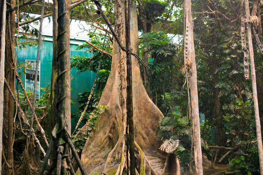 Amazonia Barcelona Branch Cable Connection Cosmocaixa Day Forest Green Green Color Growth Leaf Lush Foliage Outdoors Plant Raindrops SPAIN Spain♥ Travel Traveling Tree Tree Tree Trunk Tropical Climate Twig