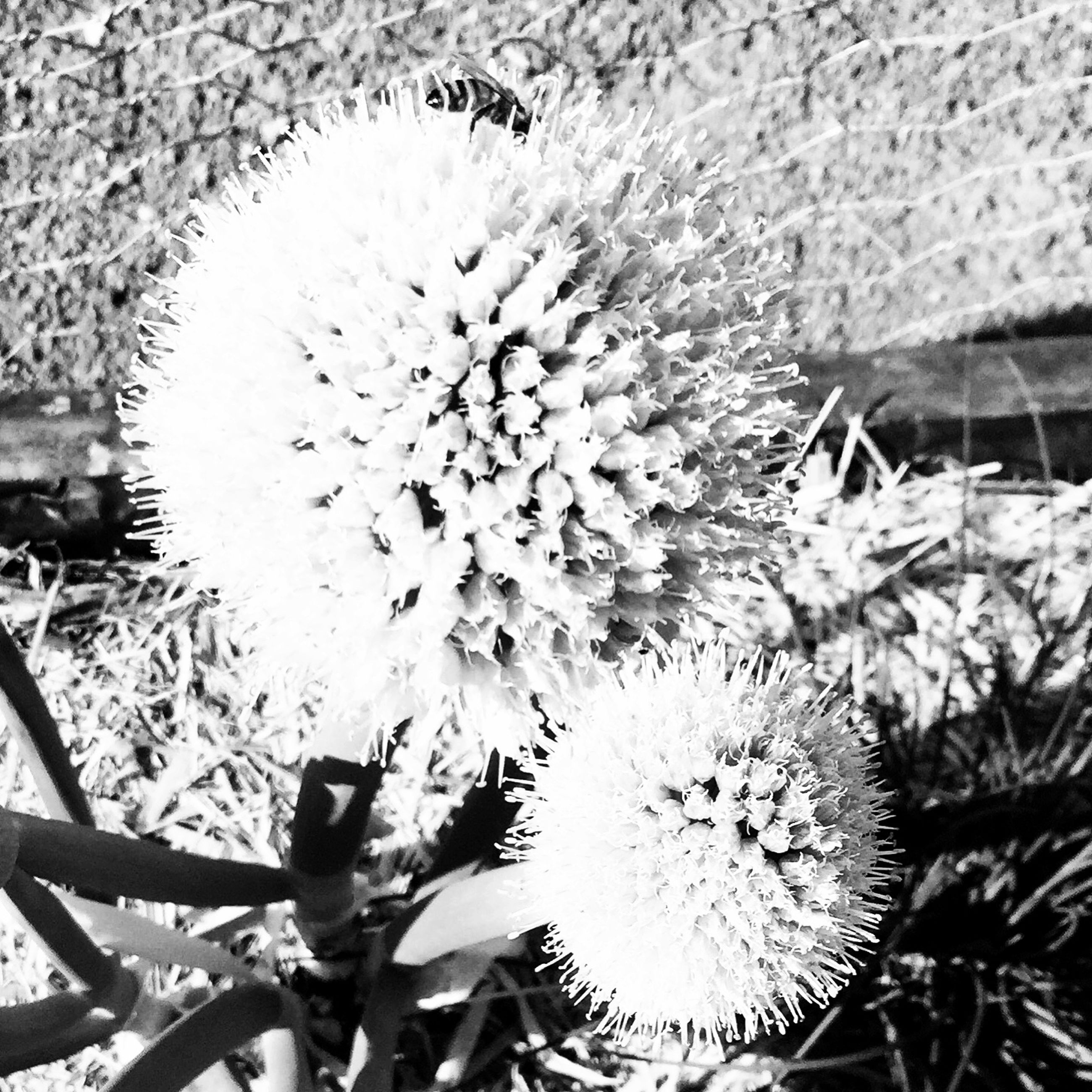 growth, flower, freshness, plant, nature, close-up, leaf, fragility, cactus, beauty in nature, day, high angle view, outdoors, no people, thorn, growing, focus on foreground, spiked, flower head, water