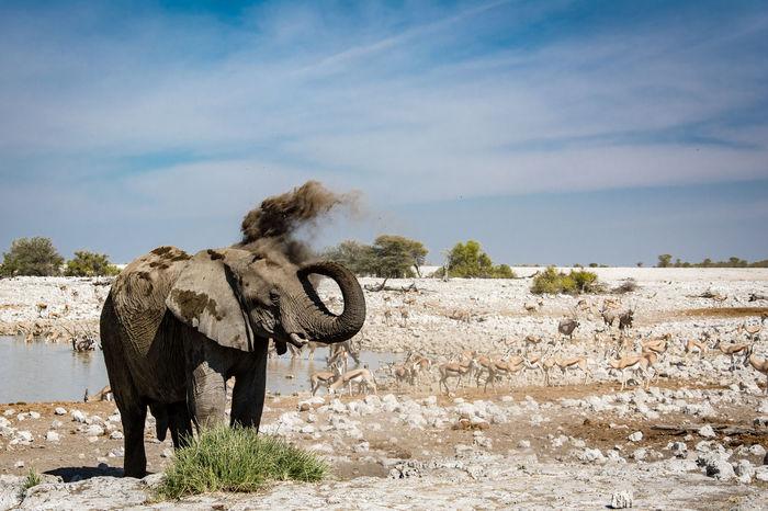 EyeEm Nature Lover Wildlife Photography African Elephant Dusting Elephant Etosha National Park Waterhole Perspectives On Nature