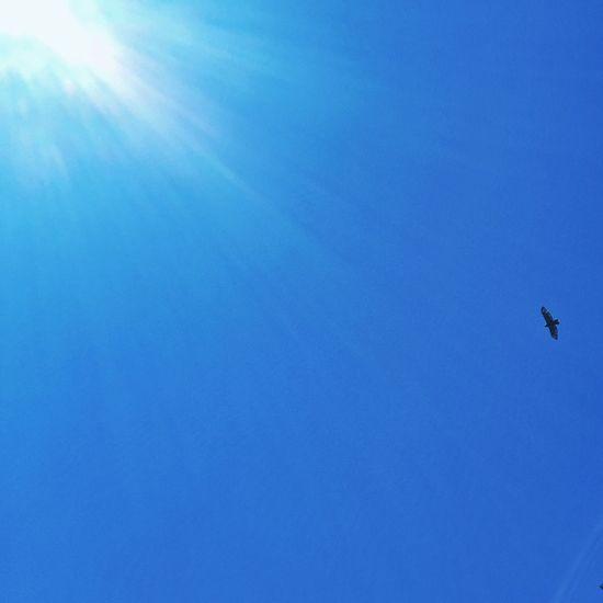 Hawk BlackfishCreek Nature Raptor