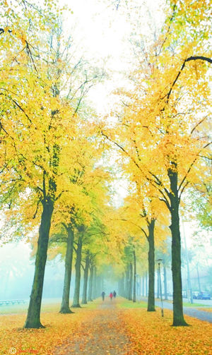 misty moring~6 Tree Nature Autumn Beauty In Nature Outdoors Tranquility Full Length Yellow Leaf Scenics Idyllic Footpath Deciduous Tree Tranquil Scene Autumn Colors Colors Of Autumn Fog Streetphotography Caught The Moment Taking Photos Hello World Fine Art The Week Of Eyeem Getting Inspired Relaxing
