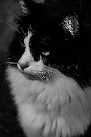 EyeEm Selects Pets Domestic One Animal Domestic Animals Animal Themes Animal Mammal Cat Close-up Feline Domestic Cat Vertebrate Animal Body Part Whisker No People Portrait Focus On Foreground Animal Head