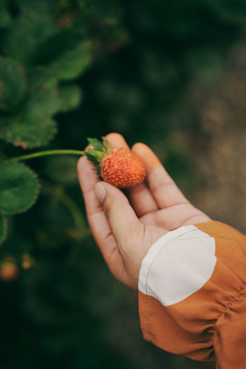 Fresh strawberries on woman hand