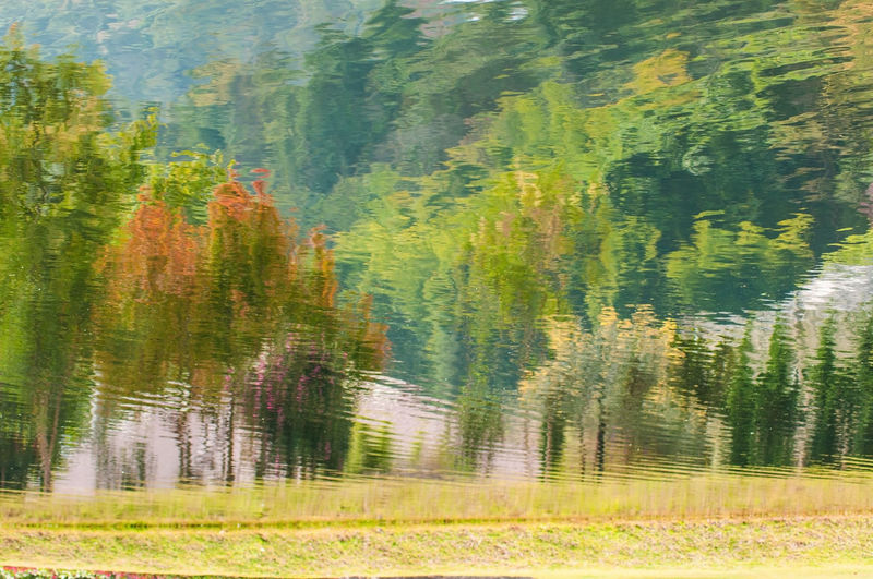 Beautiful water reflection view, landscape concept. Freshness Relaxing Wave Autumn Beauty In Nature Color Paint Day Forest Grass Landscape Mountain Multi Colored Nature Outdoors Pine Tree Plant Scenics Spruce Tree Tree Up Side Down