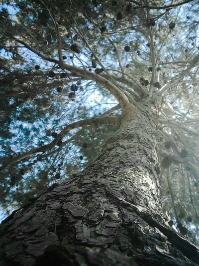 The Great Outdoors - 2017 EyeEm Awards Nature Outdoors Low Angle View Day Beauty In Nature Forest Landscape Outdoors Sun Tree EyeEmNewHere