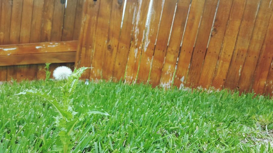 From the view of a squirrel Grass Green Color Plant Growth Day Outdoors No People Nature Building Exterior Water Freshness Flower Green Close-up Leaf Life Growth Beauty In Nature Fleeting Moments Time Wish White Brown Fence Weed