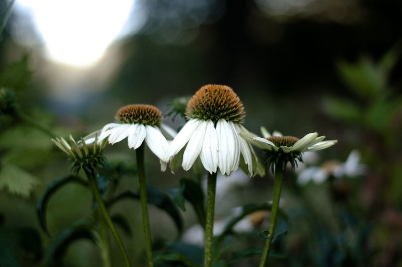Close-up of flowers blooming outdoors