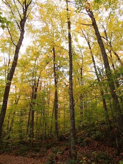 Couleurs d'automne - Fall Foliage Fall Colors Foliage Tree Plant Growth Beauty In Nature Land Forest No People