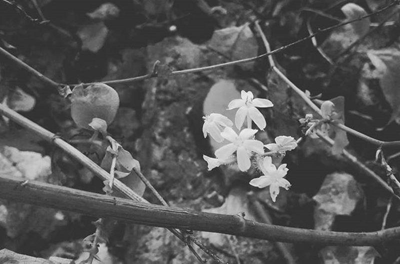 Em meio a tanta destruição e dor, renasce uma nova vida. TheRestart Newlife FlowersWhite
