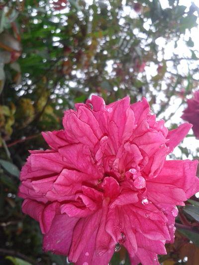 Walking Around Flowers, Nature And Beauty