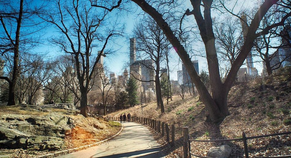 Park NYC Skyline NYC Street Photography NYC Central Park Urban Skyline Urban Geometry Urban Skyline Tree Plant The Way Forward Direction Nature Tranquility Road