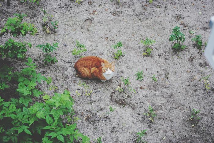 EyeEm Nature Lover Catlover Cat Summer