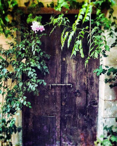 Dalt Vila Ibiza Plant Entrance Nature Ivy Old