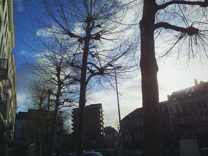 Brussels Nature Schuman Jourdan
