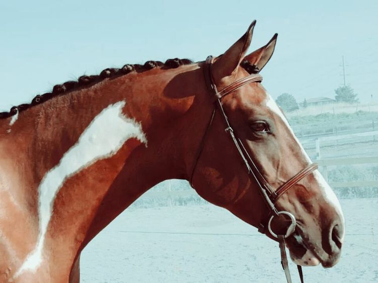 Finn. Horse Horses Infiniti Paint Horse Photography