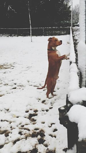 Dog Dog❤ Mydog Dogslife Snow Hello World Watching Winter EyeEm Best Shots EyeEm Nature Lover EyeEm Gallery The Week On Eyem The Dogs Point Of Vieuw