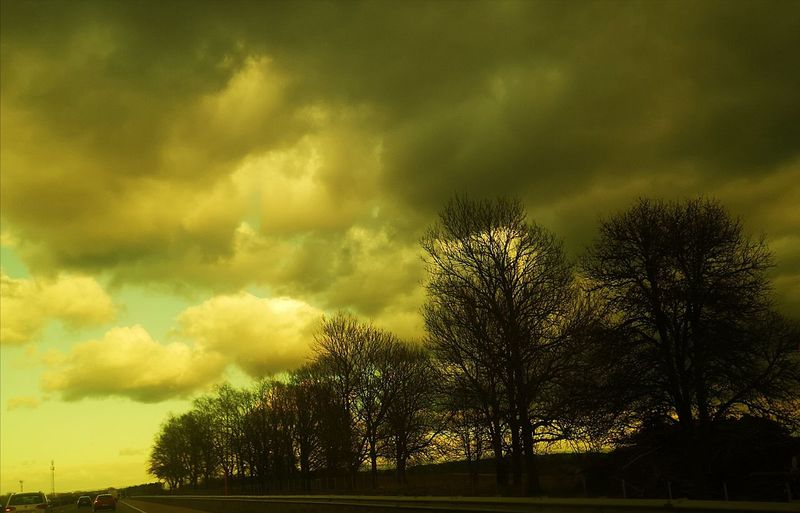 Low angle view of trees against dramatic sky
