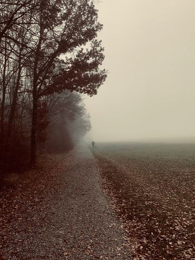 Fog Walk With